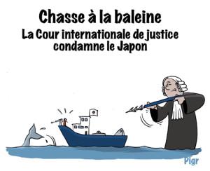 chasse à la baleine, jugement, juge, japon